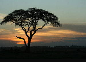 Amboseli tour