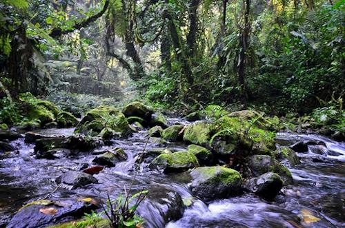 bwindi water, gorilla trekking