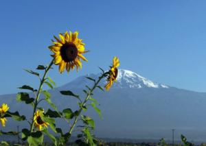 Beautiful scenes of Mt. Kilimanjaro.