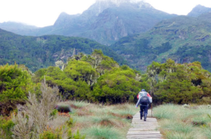 Hiking Mt. Rwenzori.