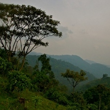 best time to visit Bwindi