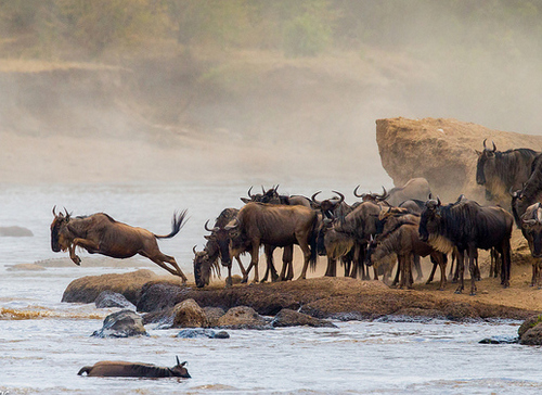 kenya great migration