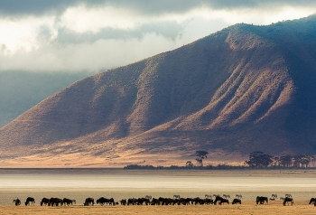 ngorongoro safari Tanzania