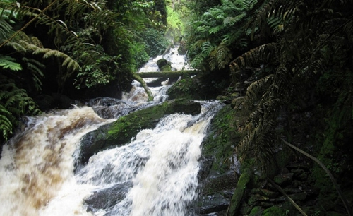 Nyungwe Forest National Park Rwanda ,Canopy Walk & Primates