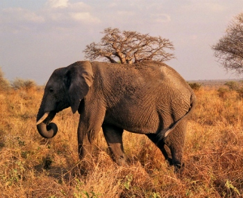 safari tarangire tanzania