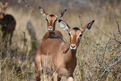 south africa safaris