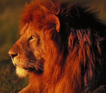 tanzania lion safari