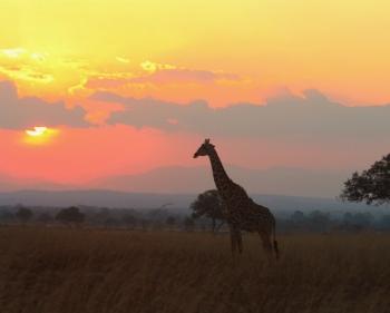 tanzania safari holiday