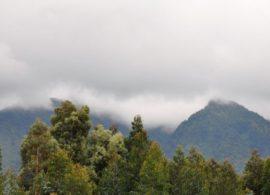 virunga gorilla mountains