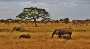 3 day safari serengeti