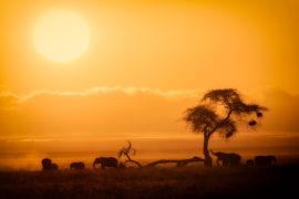 african safari costs