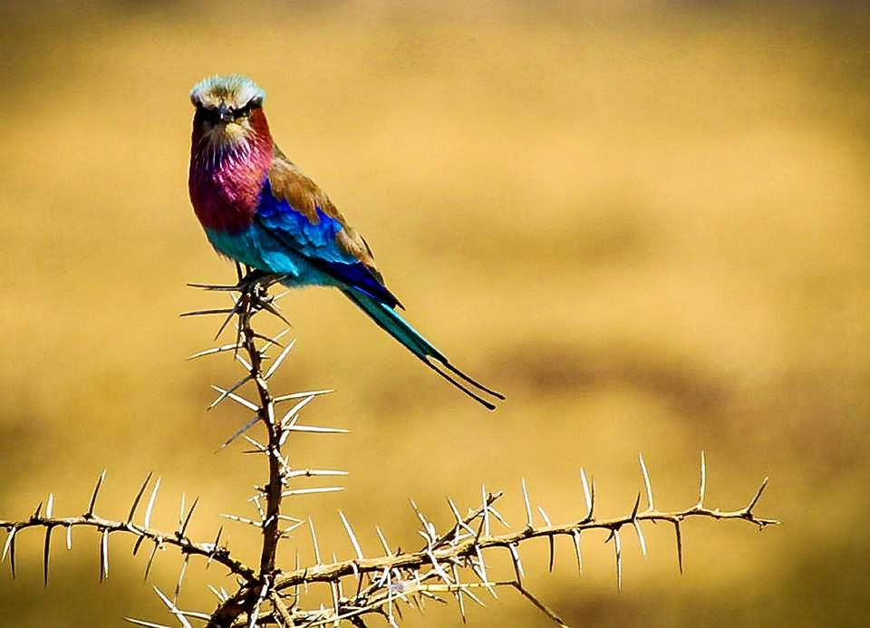 birding in serengeti