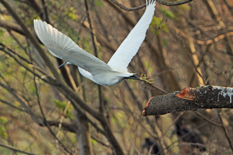 birding in Uganda safaris