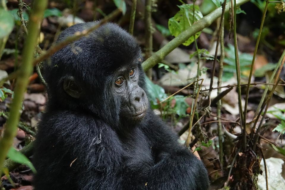 Uganda Tours, 16 Things To Do in Uganda