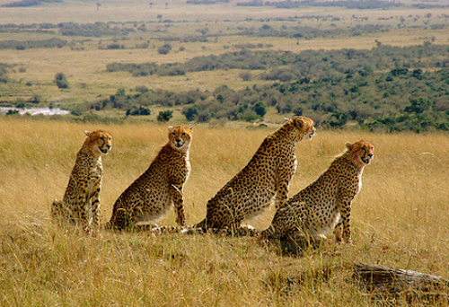 Kenya Safari Cost, Prices By Day & Destinations