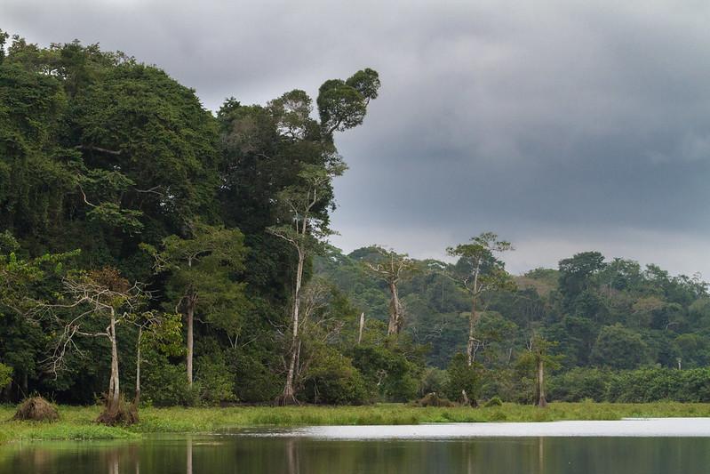 loango national park gorillas Gabon