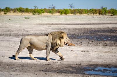 luxury botswana safaris
