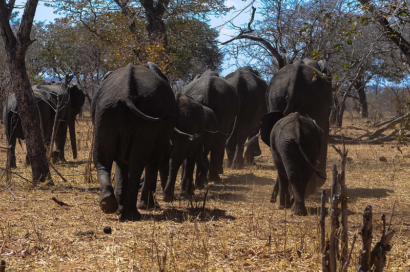 moremi safaris