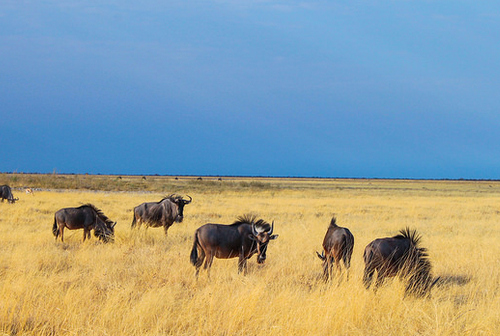 namibia wildlife safari