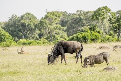 ngorongoro crater safari animals