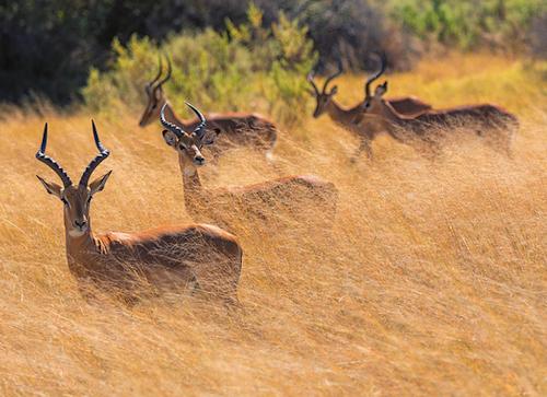 okavango safari botswana