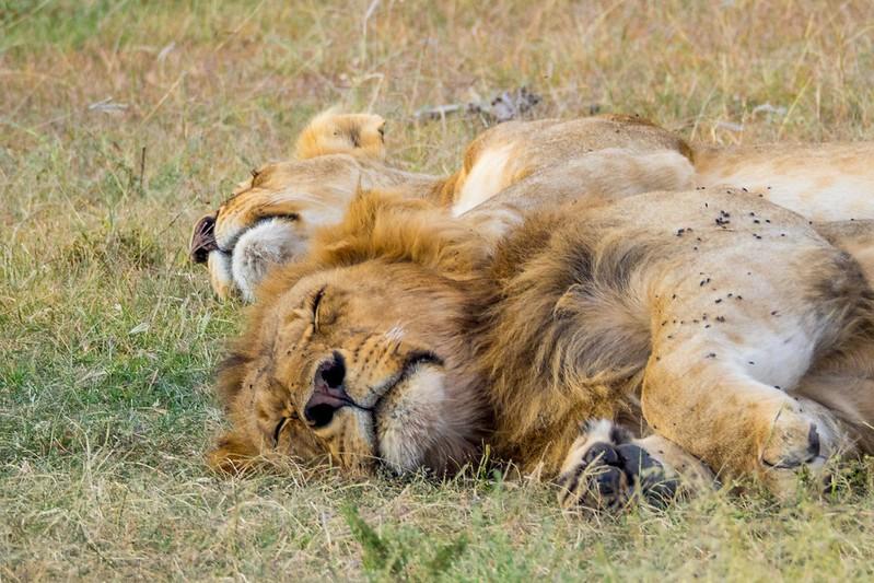 queen elizabeth national park uganda tours