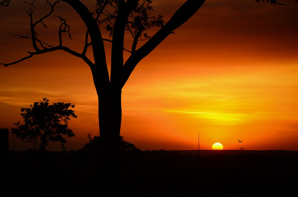 safari time of the year