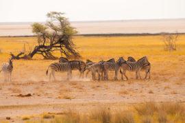 safaris namibia