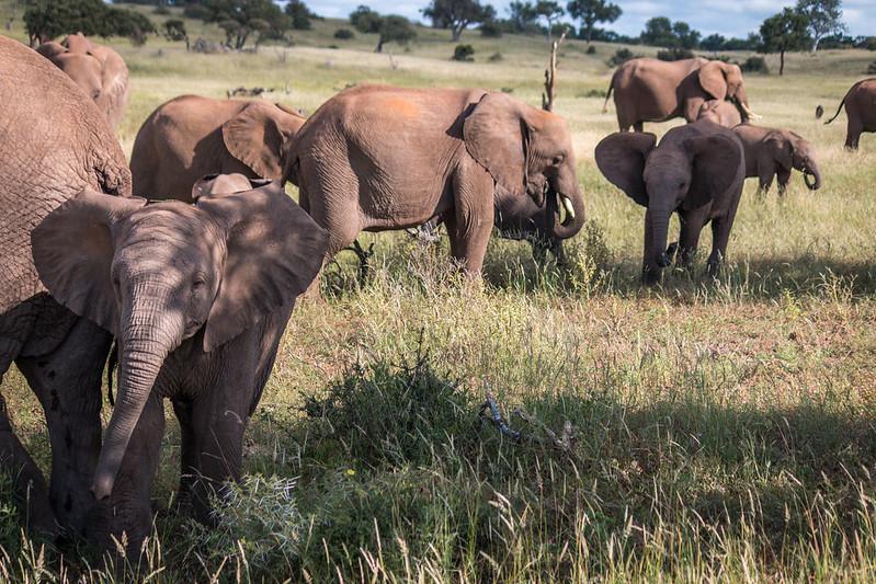visit botswana safaris