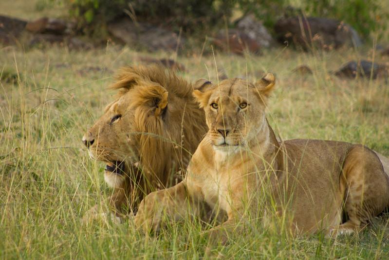 visiting masai mara