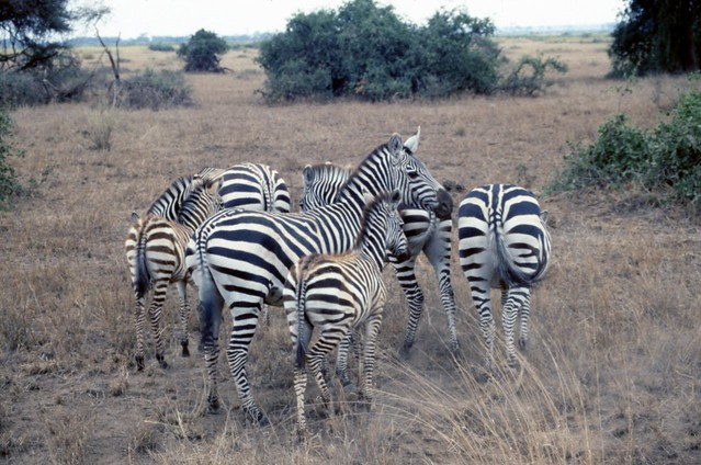 African Safari Cost, Prices For Both Luxury and Budget Tour Options